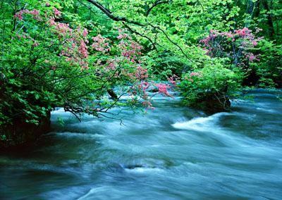 Фотообои природа сакура над горной